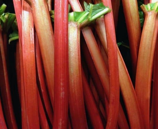 In Season Now: Rhubarb